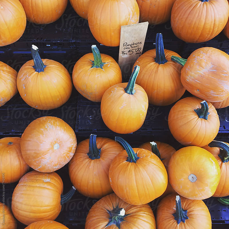 Pumpkins at a stand by Chelsea Victoria for Stocksy United