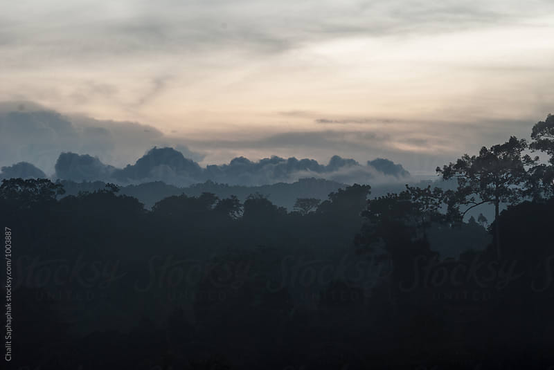 Khao Yai National Park by Chalit Saphaphak for Stocksy United