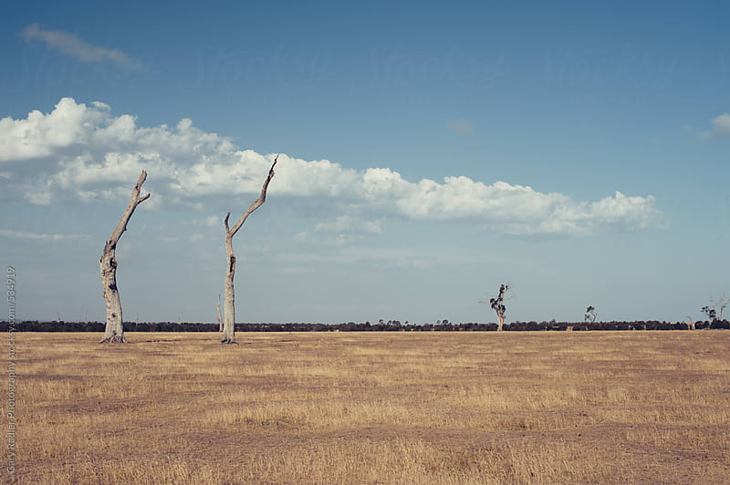 Two Dead Trees by Gary Radler Photography for Stocksy United