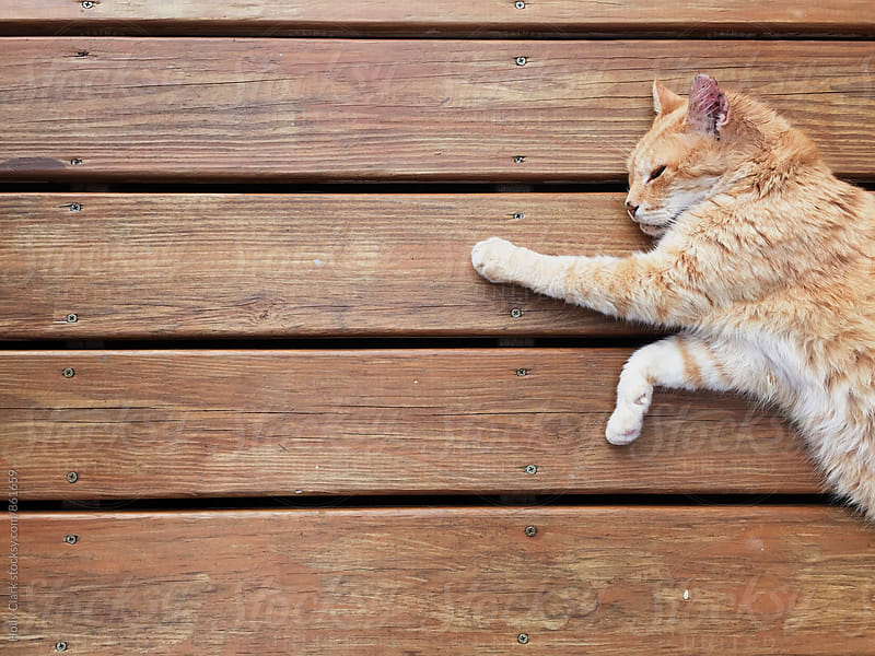 Orange Kitty laying on a wooden deck by Holly Clark for Stocksy United
