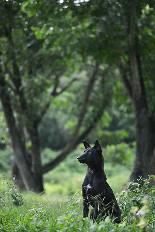 Dog in forest by Chalit Saphaphak for Stocksy United