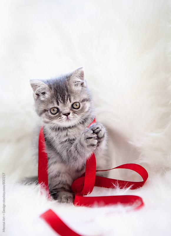 Kitten and Ribbon by Mental Art + Design for Stocksy United