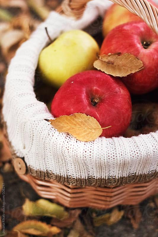 Fresh apples by Jovana Rikalo for Stocksy United