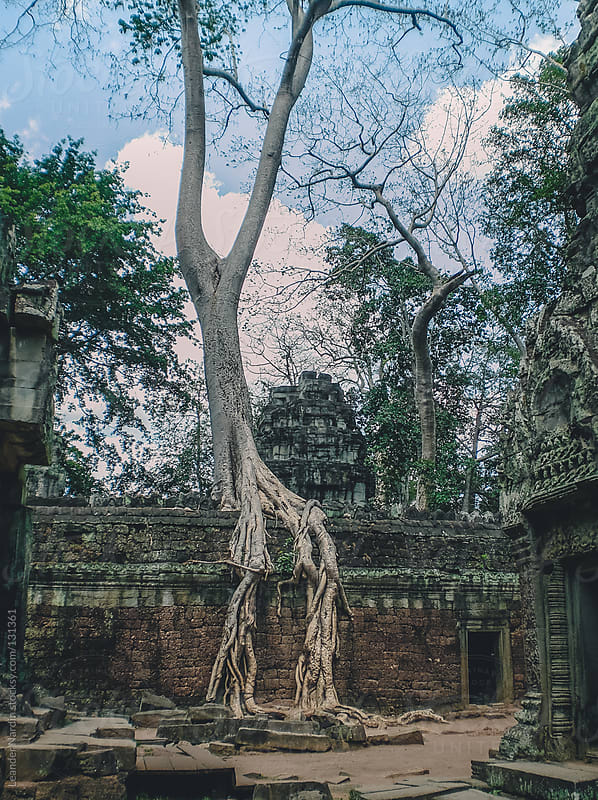 Tree in Ta Phrom. Angkor Wat, Cambodia by Leander Nardin for Stocksy United