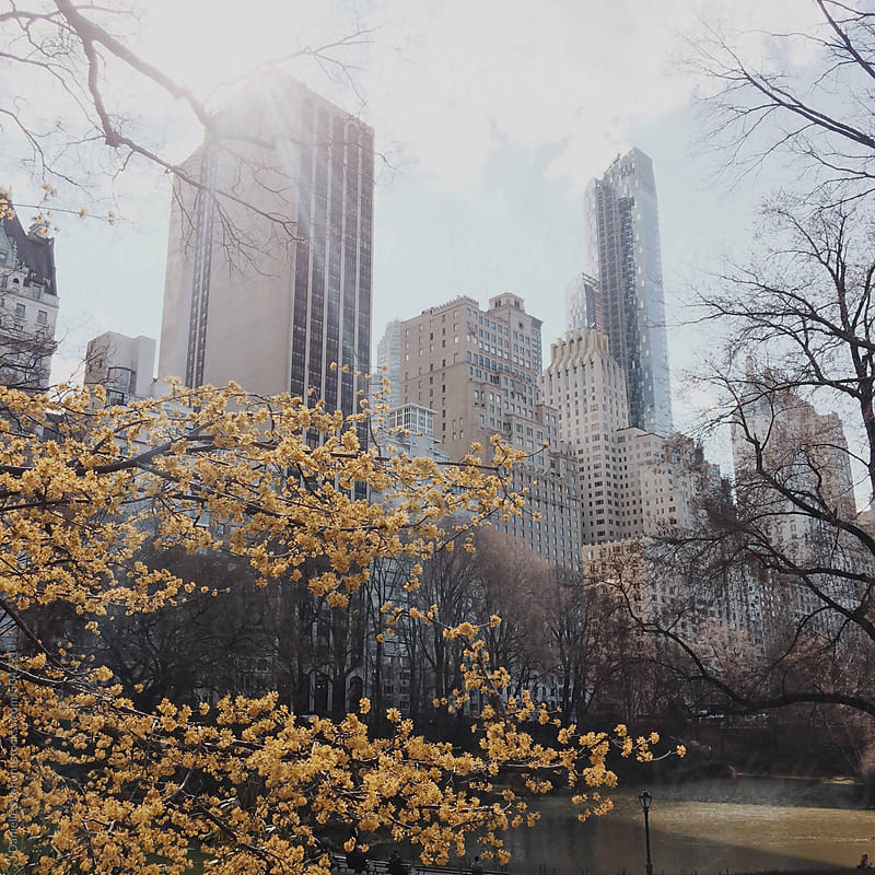 View of New York City from Central Park. by J Danielle Wehunt for Stocksy United