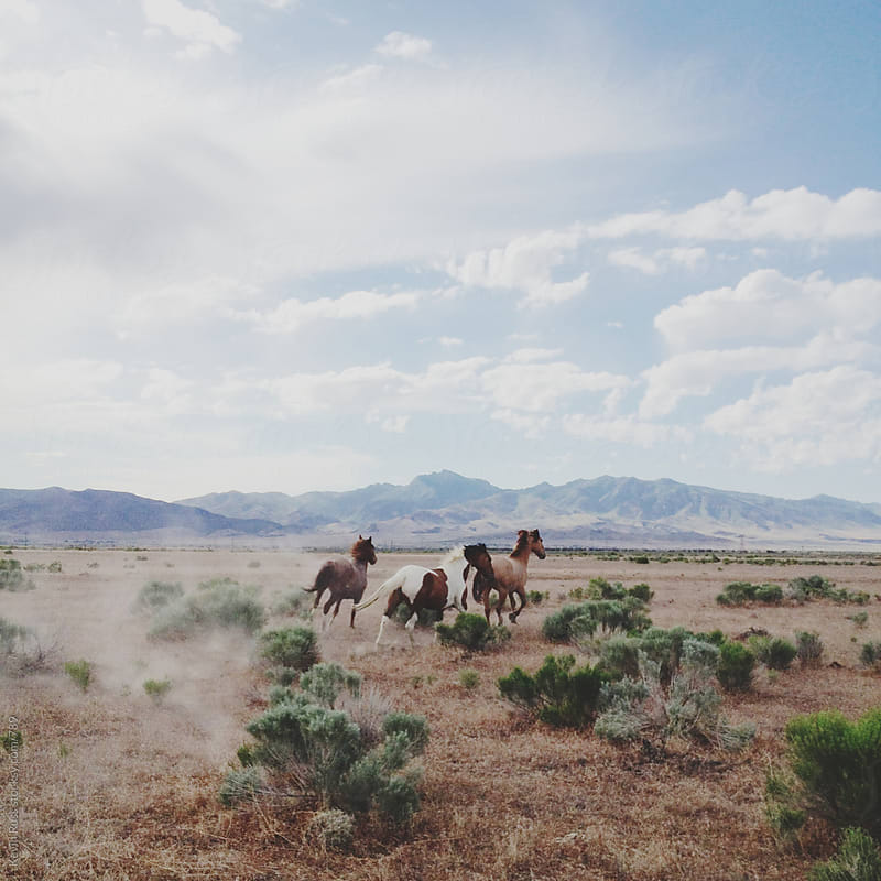 Running Wild Horses by Kevin Russ for Stocksy United