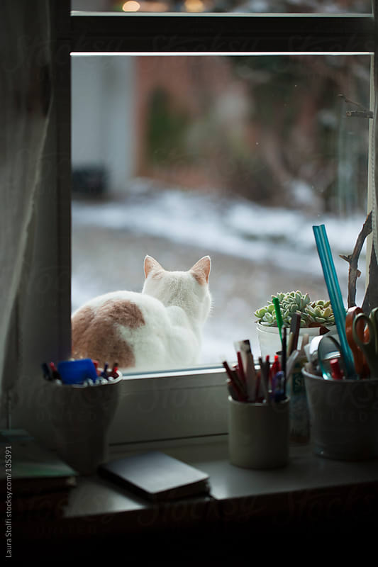 Rear sight of cat laying on windowsill out of the window in winter by Laura Stolfi for Stocksy United