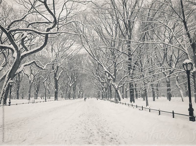 Central Park Winter Path by Vivienne Gucwa for Stocksy United