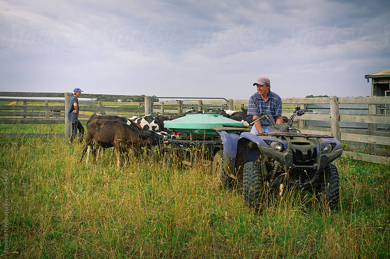 Farmers Feeding Calves in Field by Rowena Naylor for Stocksy United