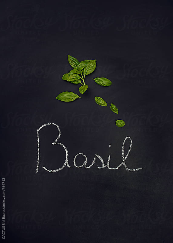 Fresh basil on a blackboard by CACTUS Blai Baules for Stocksy United