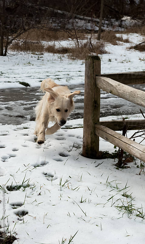 Dog Running in the Winter by Studio Six for Stocksy United