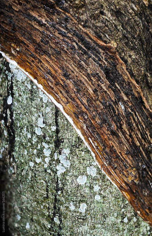 Tree Bark by Lumina for Stocksy United