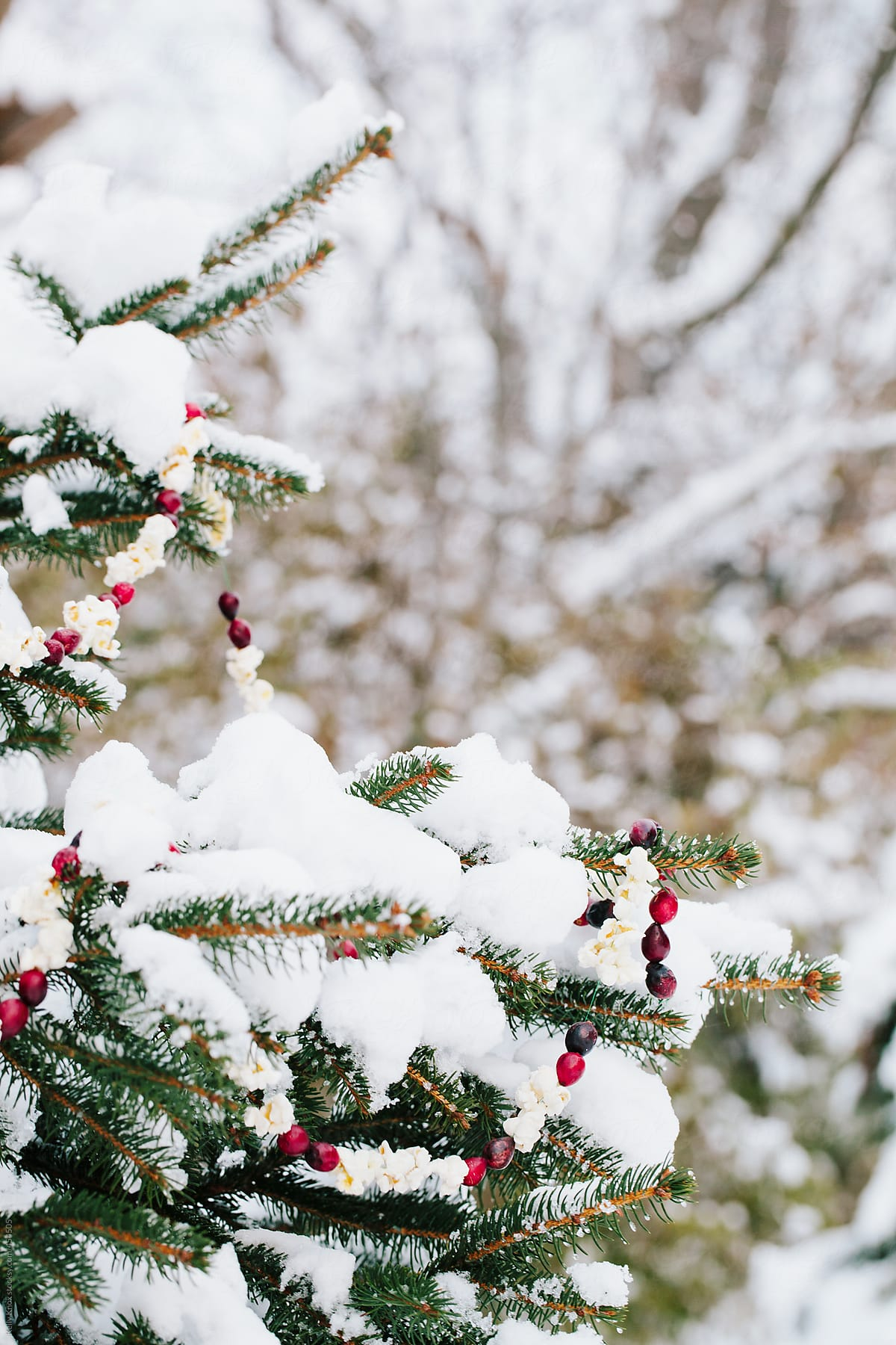 Snow Covered Fir Tree Decorated With Cranberry And Popcorn Garland