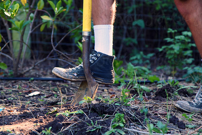 Man digging in the garden with a shovel by Carolyn Lagattuta for Stocksy United