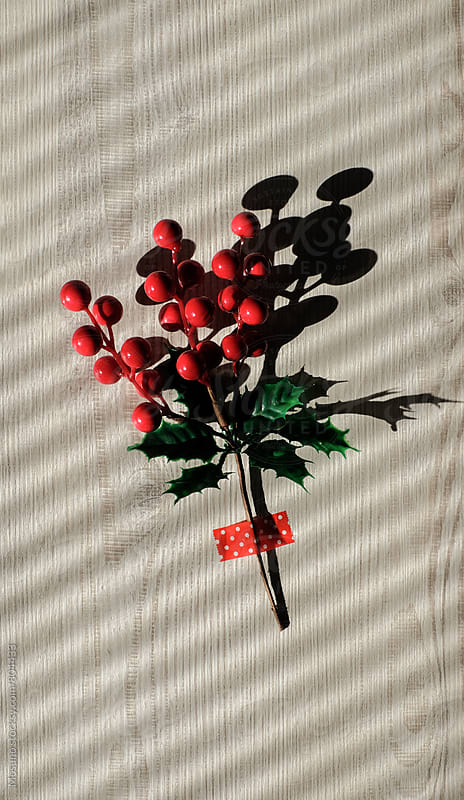 Christmas Twig on a Sunlit Wall by Mosuno for Stocksy United