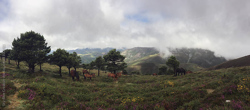 Herd of wild horses grazing in the mountain. Cantabria, Spain by Luca Pierro for Stocksy United