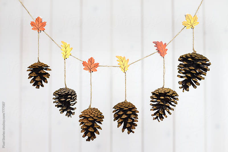 Conifer cones hung on drying line by Pixel Stories for Stocksy United
