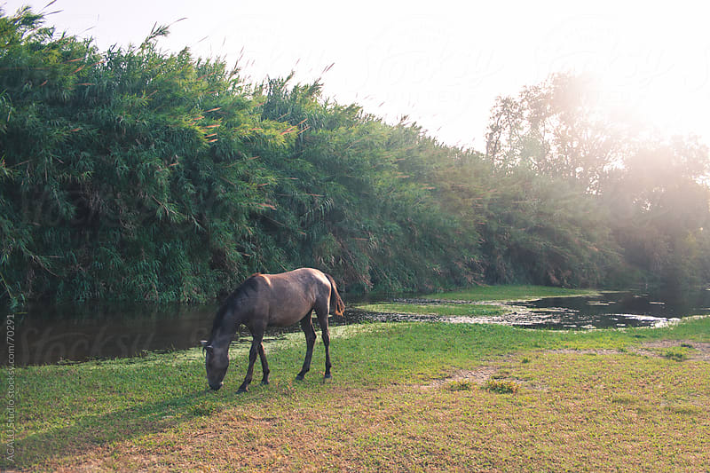Horse grazing near the river Guadalhorce in Malaga by ACALU Studio for Stocksy United