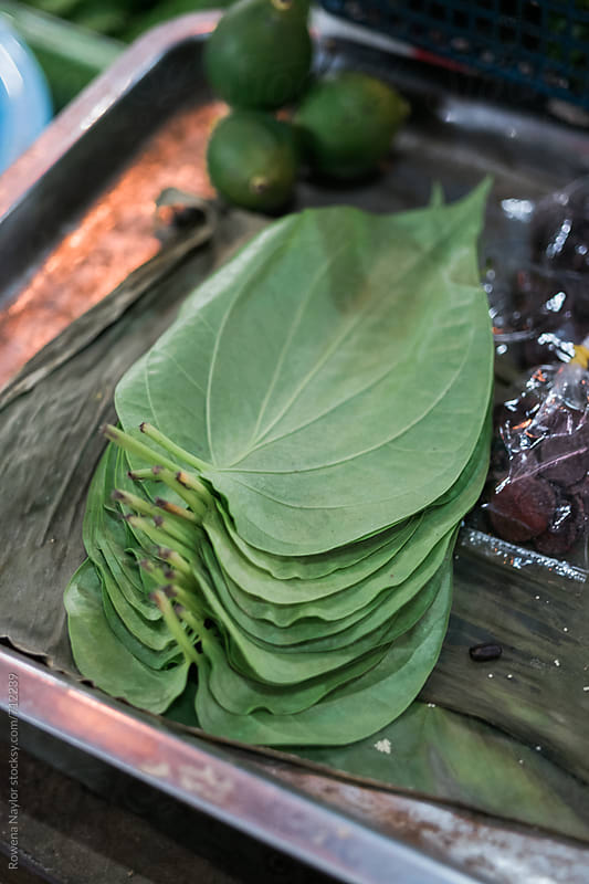 Betel leaves by Rowena Naylor for Stocksy United