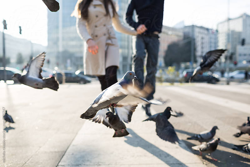 Couple walking amongst the pigeons by michela ravasio for Stocksy United