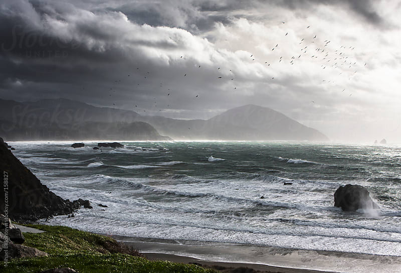 Flock of birds flying through a brewing storm on Oregon coast by Mihael Blikshteyn for Stocksy United