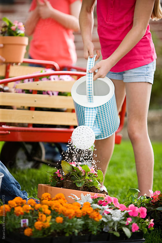 Planting: Watering a New Pot of Flowers by Sean Locke for Stocksy United
