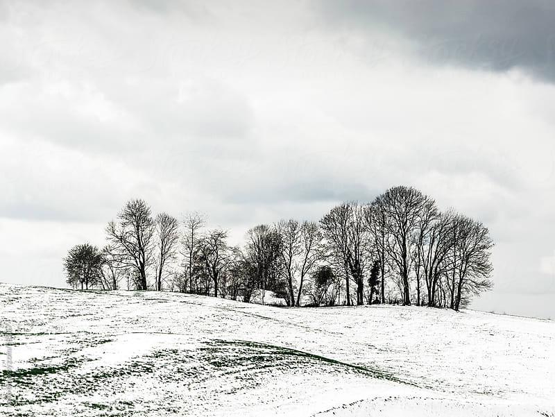 trees landscape hill sky winter by rolfo for Stocksy United