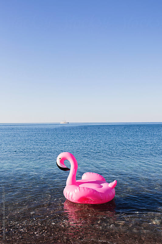 Pink flamingo float in the sea by Jovana Rikalo for Stocksy United