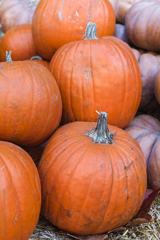 Orange pumpkins for sale at an outdoor market. by Holly Clark for Stocksy United