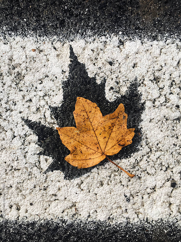 fallen leaf by Paul Schlemmer for Stocksy United