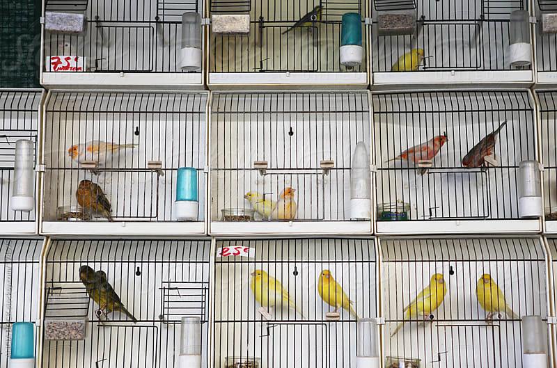 Paris Bird Market - Marche aux Oiseaux by ALICIA BOCK for Stocksy United
