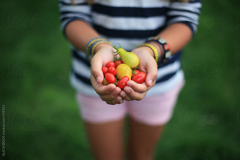 Holding Tomatoes by ALICIA BOCK for Stocksy United