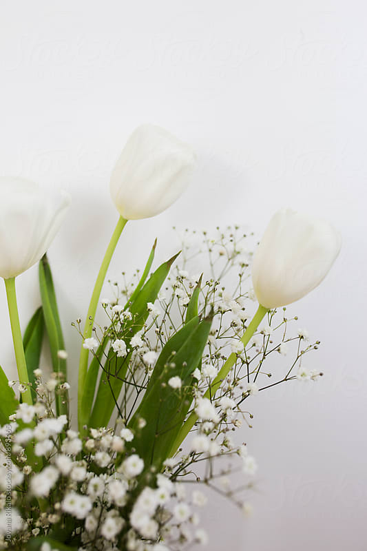 White tulips close up by Jovana Rikalo for Stocksy United