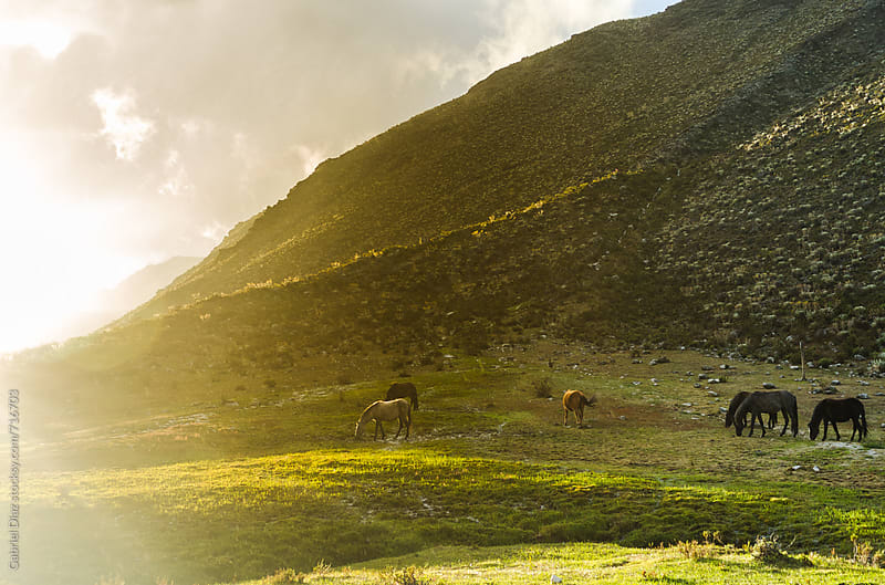 Horses eating on the  mountain at sunset by Gabriel Diaz for Stocksy United