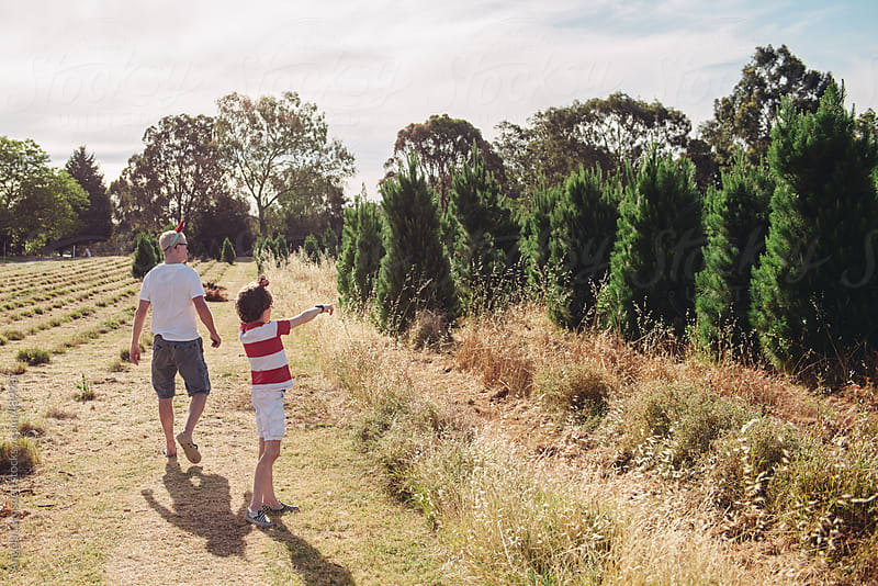 Father and son choosing a christmas tree at an Australian christmas tree farm in summer by Angela Lumsden for Stocksy United