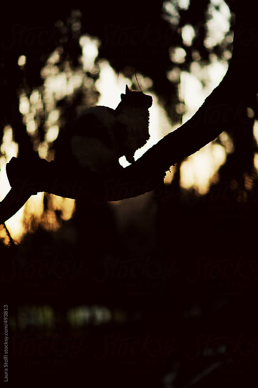 Silhouette of cat climbing a tree in garden at sunset by Laura Stolfi for Stocksy United