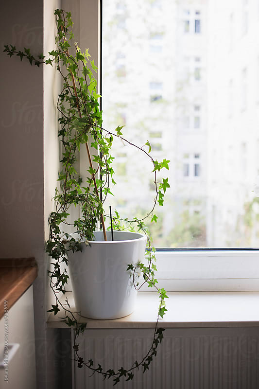 Plant in the kitchen by Jovana Rikalo for Stocksy United