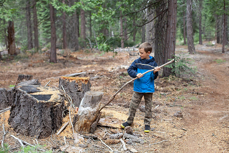 Boy takes a break from hiking to peel bark off a stump by Carleton Photography for Stocksy United