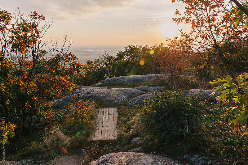 Vista of autumn trail in Gatineau Park at sunset by Preappy for Stocksy United