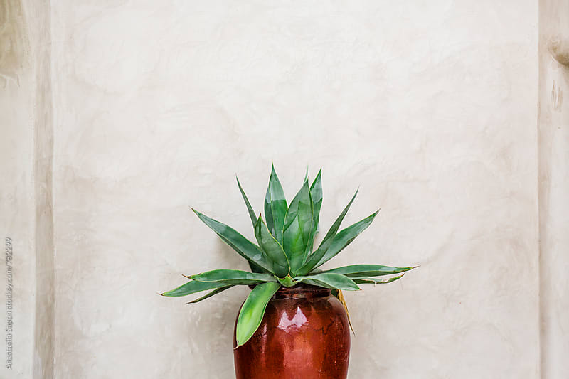 plant by Anastasiia Sapon for Stocksy United