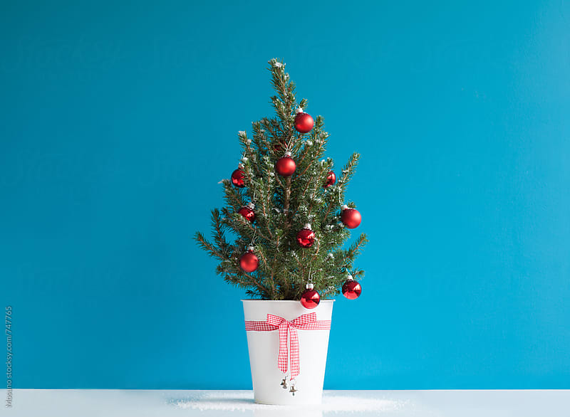 Small Christmas Tree Against Blue Wall by Mosuno for Stocksy United