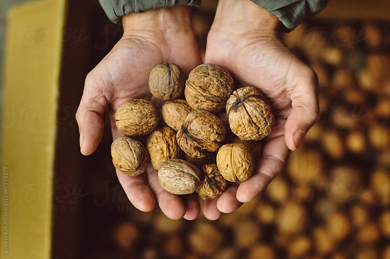 walnuts by Jovana Vukotic for Stocksy United