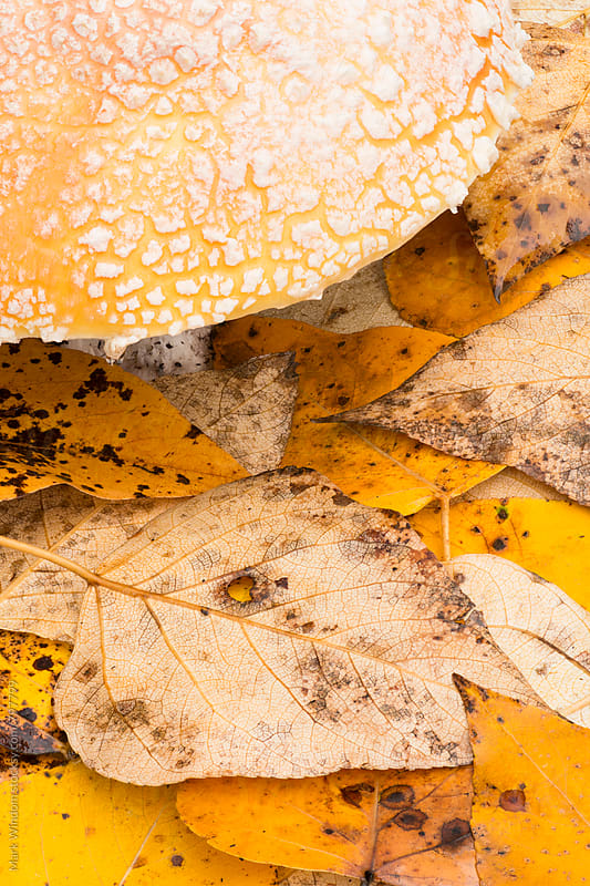 Mushroom and leaves in Autumn, closeup by Mark Windom for Stocksy United