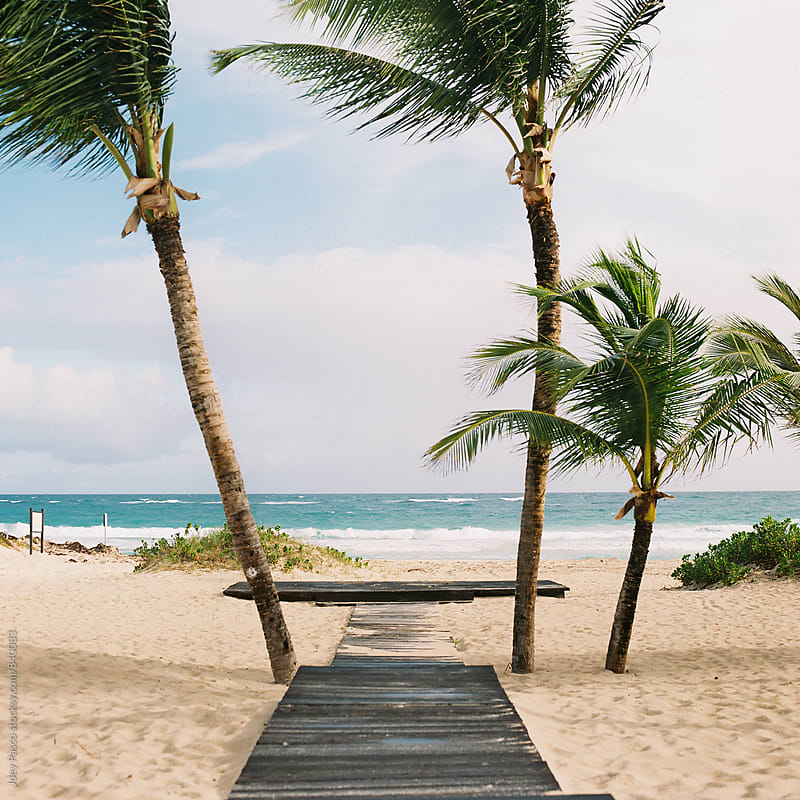 Boardwalk leads to empty platform flanked by palm trees on Caribbean beach by Joey Pasco for Stocksy United