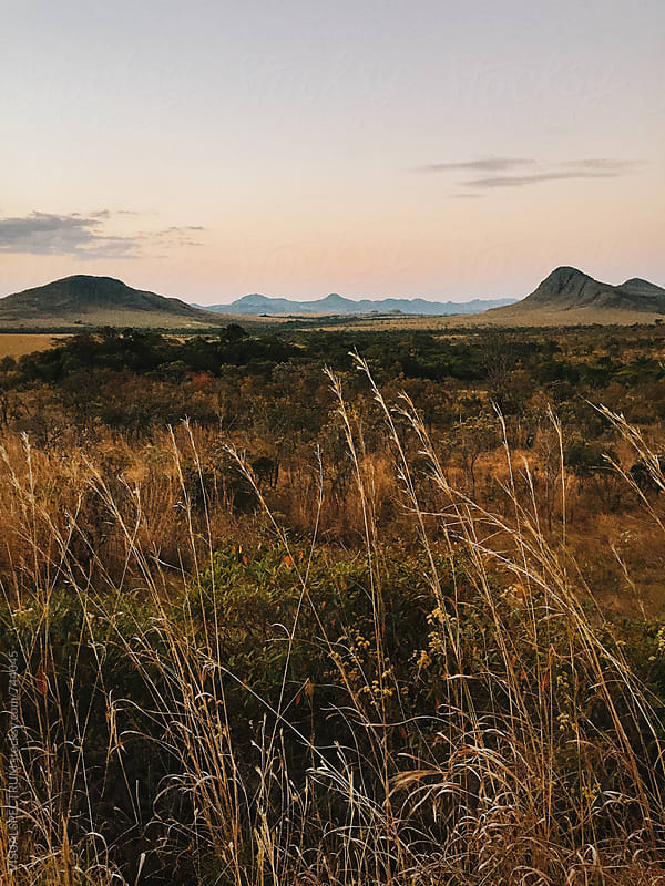 Dry Landscape in Brazilian State of Goias - National Park Chapada dos Veadeiros by VISUALSPECTRUM for Stocksy United