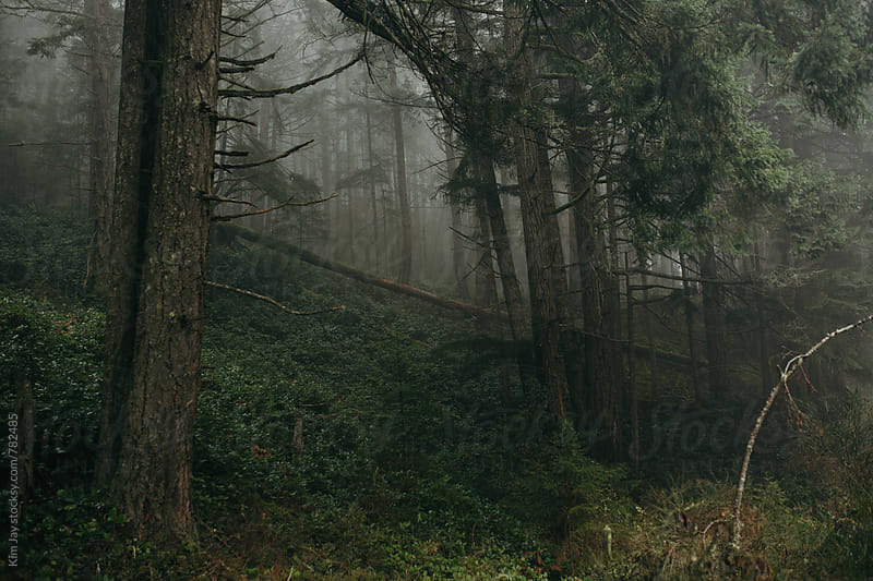 Foggy Trees by Kim Jay for Stocksy United