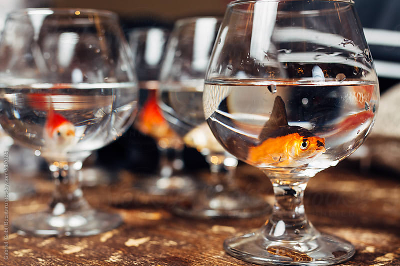 Orange fish in a wine glass by Gabriel (Gabi) Bucataru for Stocksy United