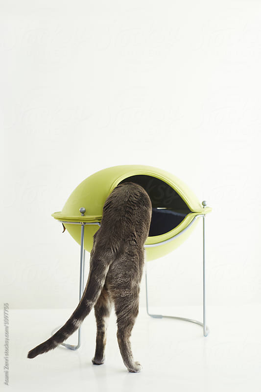 Cat climbing up to cat bed by Asami Zenri for Stocksy United
