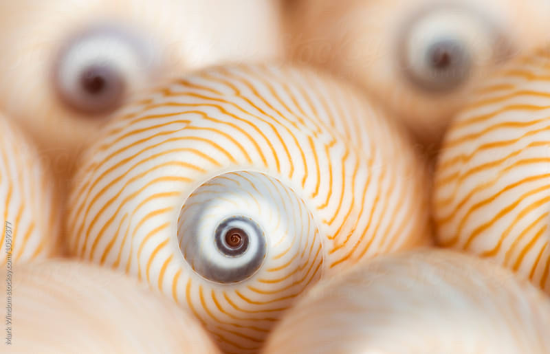 'Lined Moon' Seashells by Mark Windom for Stocksy United