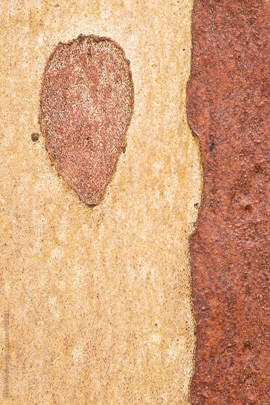 Japanese Stewartia bark patterns, closeup by Mark Windom for Stocksy United